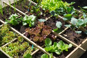 Simple Things All Organic Gardeners Should Know