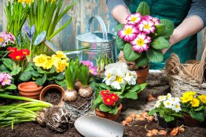 Gardening Helpful Tips