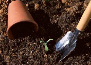 Top Gardening Tips