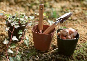 Simple Gardening Tips