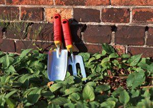 Tips And Ideas for Gardener